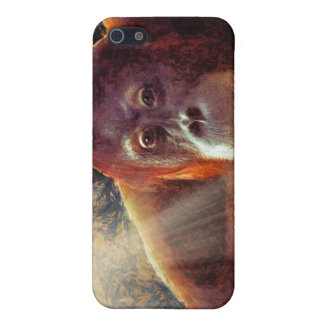 Great Apes Primate Wildlife-lovers Gift iPhone SE/5/5s Cover