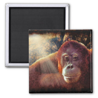 Great Apes Primate Wildlife-lovers Gift Magnets