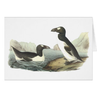 Great Auk, John Audubon Card
