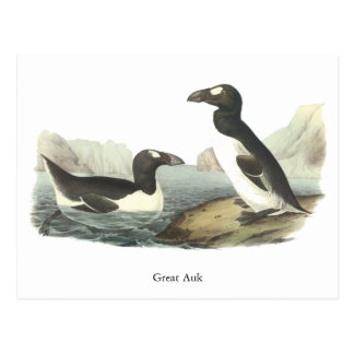 Great Auk, John Audubon Postcard