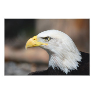 Great Bald Eagle Art Photo