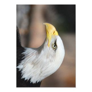 Great Bald Eagle Card