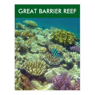 great barrier fish postcard