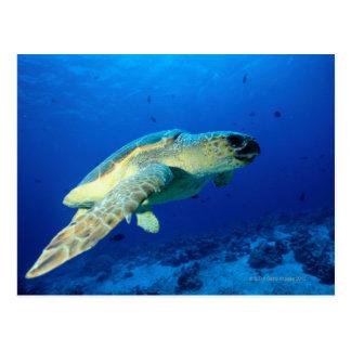 Great Barrier Reef, Australia 2 Postcard