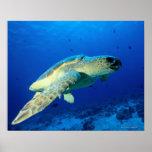 Great Barrier Reef, Australia 2 Print