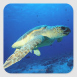 Great Barrier Reef, Australia 2 Sticker