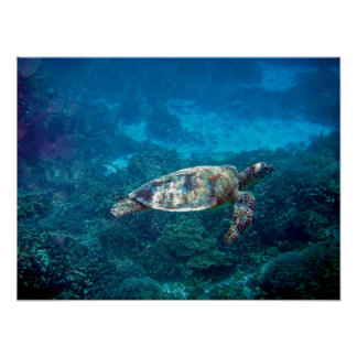 Great Barrier Reef Sea Turtle Poster