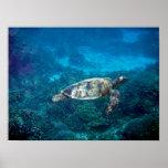 Great Barrier Reef Sea Turtle Print