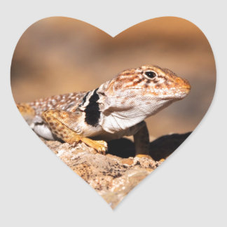 Great Basin Collared Lizard - Burr Trail - Utah Heart Sticker