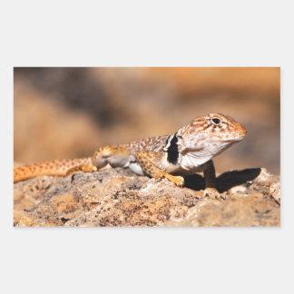 Great Basin Collared Lizard - Burr Trail - Utah Rectangular Sticker