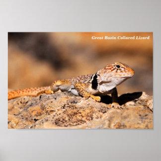 Great Basin Collared Lizard Poster