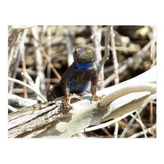 Great Basin Fence Lizard at Joshua Tree Postcard