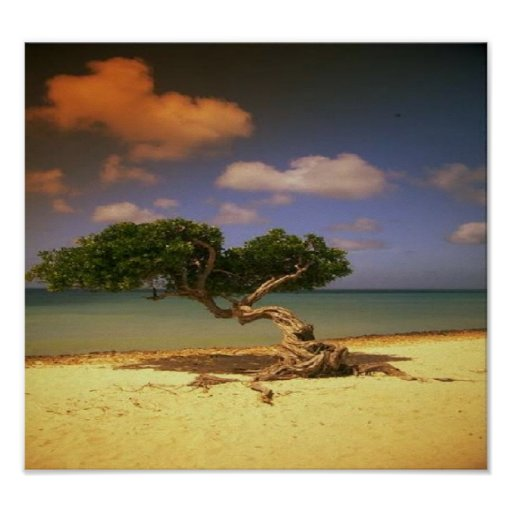 Great beach day, with unique tree on canvas poster