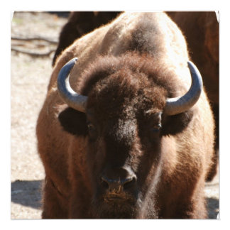 Great Bison Invites