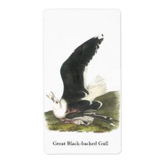 Great Black-backed Gull, John Audubon Label