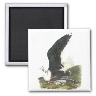 Great Black-backed Gull, John Audubon Magnet