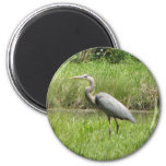 Great Blue Heron 2 Inch Round Magnet