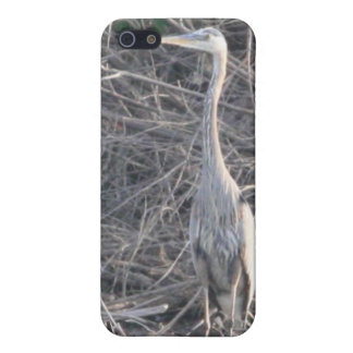 Great Blue Heron 4/4s Cover For iPhone SE/5/5s