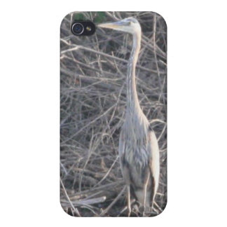 Great Blue Heron 4/4s iPhone 4/4S Cover
