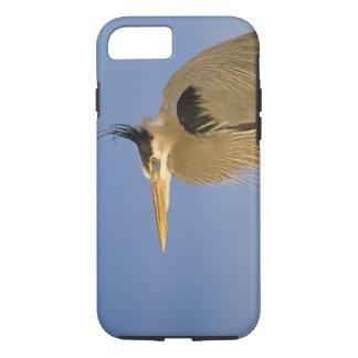 Great Blue Heron, Ardea herodias, adult, iPhone 8/7 Case