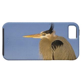 Great Blue Heron, Ardea herodias, adult, iPhone SE/5/5s Case