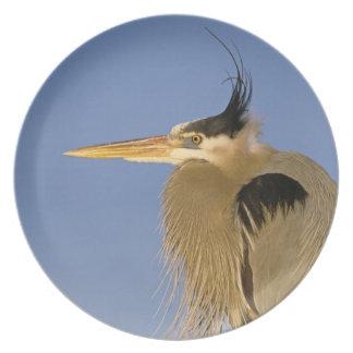 Great Blue Heron, Ardea herodias, adult, Melamine Plate