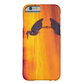 Great Blue Heron (Ardea herodias) fishing at Barely There iPhone 6 Case