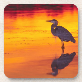 Great Blue Heron (Ardea herodias) fishing at Drink Coaster