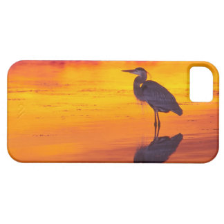 Great Blue Heron (Ardea herodias) fishing at iPhone SE/5/5s Case