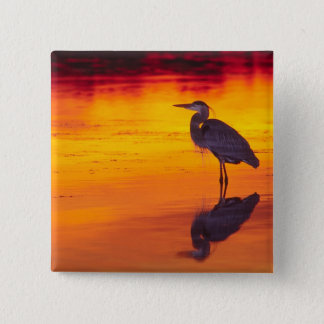 Great Blue Heron (Ardea herodias) fishing at Pinback Button