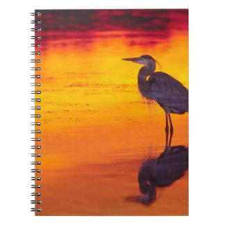 Great Blue Heron (Ardea herodias) fishing at Spiral Notebook