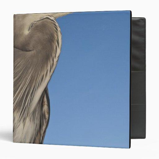 Great Blue Heron Ardea herodias) Puerto Binder