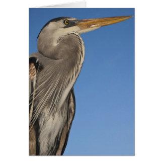 Great Blue Heron Ardea herodias) Puerto Card