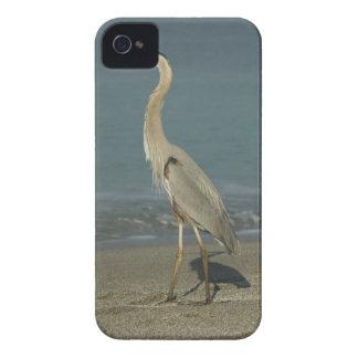 Great Blue Heron (Ardea herodias) standing along iPhone 4 Cover