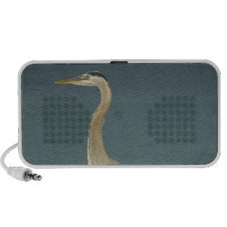 Great Blue Heron (Ardea herodias) standing along Travel Speakers
