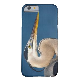 Great Blue Heron (Ardea herodias). USA, Florida, Barely There iPhone 6 Case