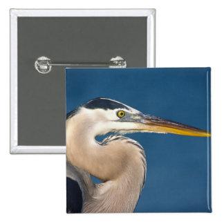 Great Blue Heron (Ardea herodias). USA, Florida, 2 Inch Square Button