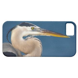 Great Blue Heron (Ardea herodias). USA, Florida, iPhone SE/5/5s Case