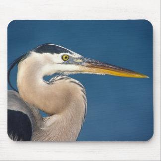 Great Blue Heron Ardea herodias USA Florida Mouse Pad