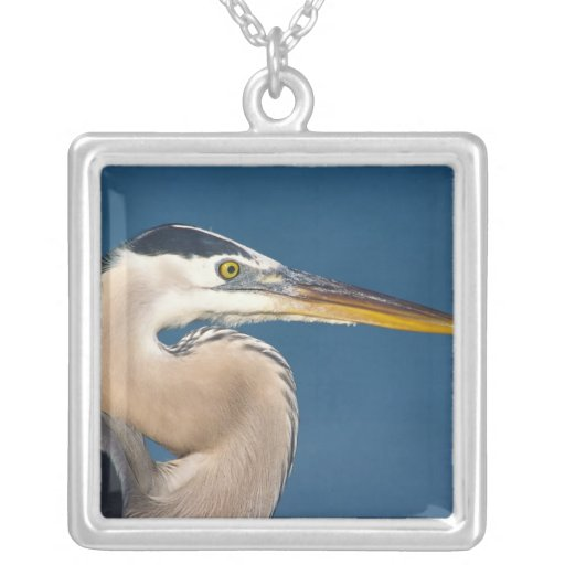 Great Blue Heron (Ardea herodias). USA, Florida, Necklace