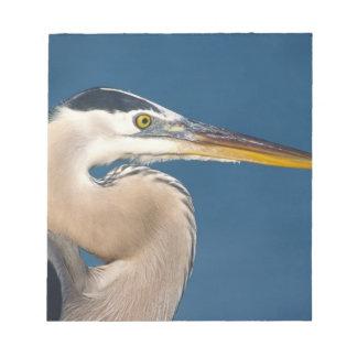 Great Blue Heron (Ardea herodias). USA, Florida, Notepad
