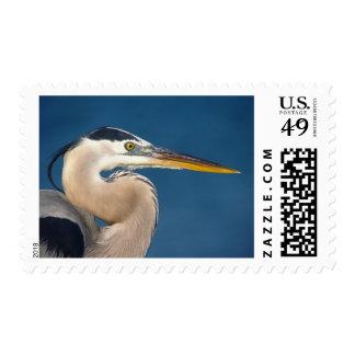 Great Blue Heron (Ardea herodias). USA, Florida, Postage