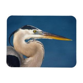 Great Blue Heron (Ardea herodias). USA, Florida, Rectangular Photo Magnet