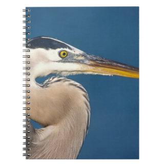 Great Blue Heron (Ardea herodias). USA, Florida, Spiral Notebook