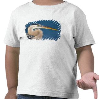 Great Blue Heron (Ardea herodias). USA, Florida, Tees