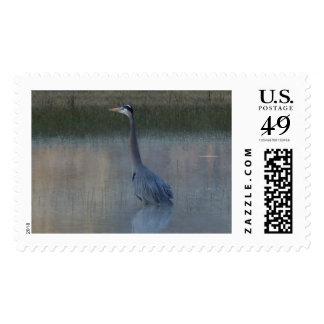 great blue heron at dawn postage