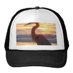 Great Blue Heron at Sunset Hat