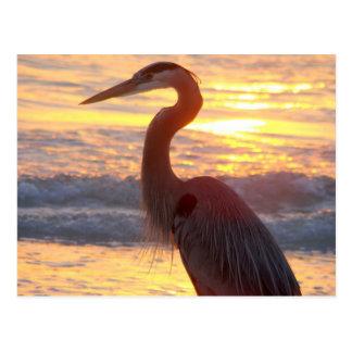 Great Blue Heron at Sunset Postcard