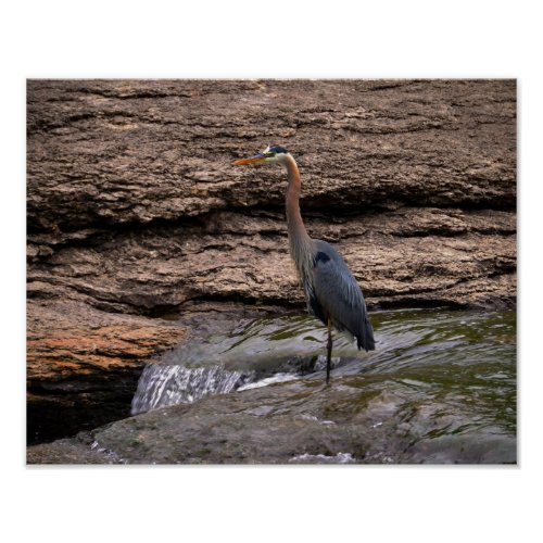 Great Blue Heron at the Falls Poster