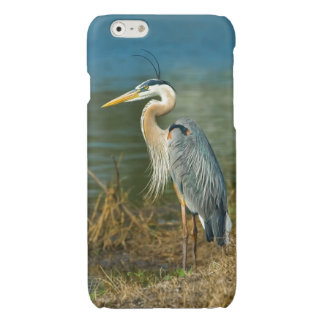 Great Blue Heron at the Pond Glossy iPhone 6 Case